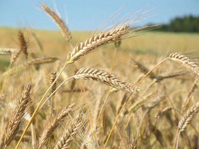 Малый агропромышленный бизнес не справился с поставленными задачами по увеличению производства в условиях эмбарго