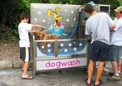 Прибыльный бизнес на организации специальной мойки для собак