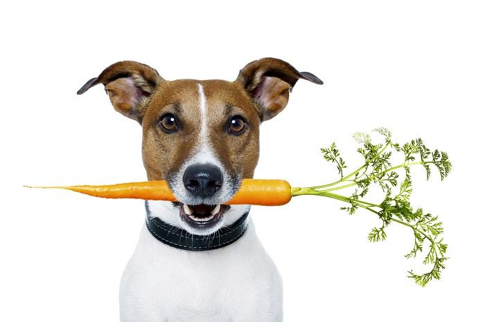 Еда для собак - идея организации прибыльного малого бизнеса