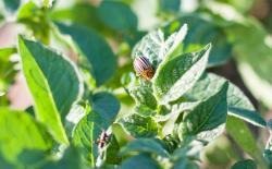 Эффективная борьба с вредителями и насекомыми