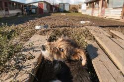 Прибыльный бизнес на спасении домашних животных